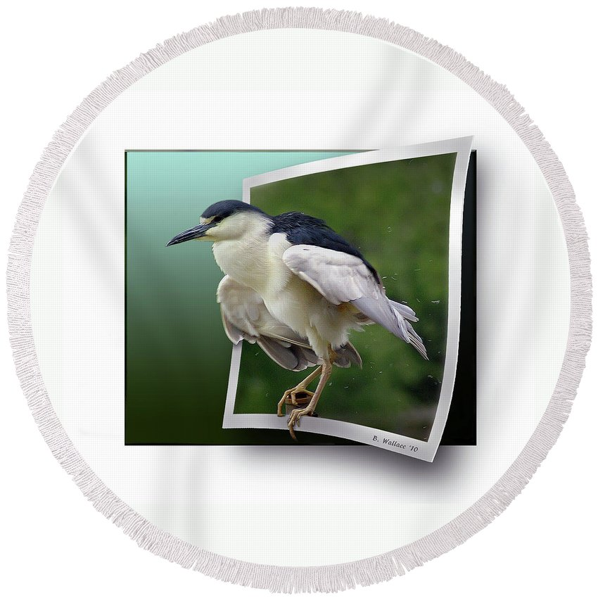 2d Round Beach Towel featuring the photograph Black Crowned Night Heron by Brian Wallace