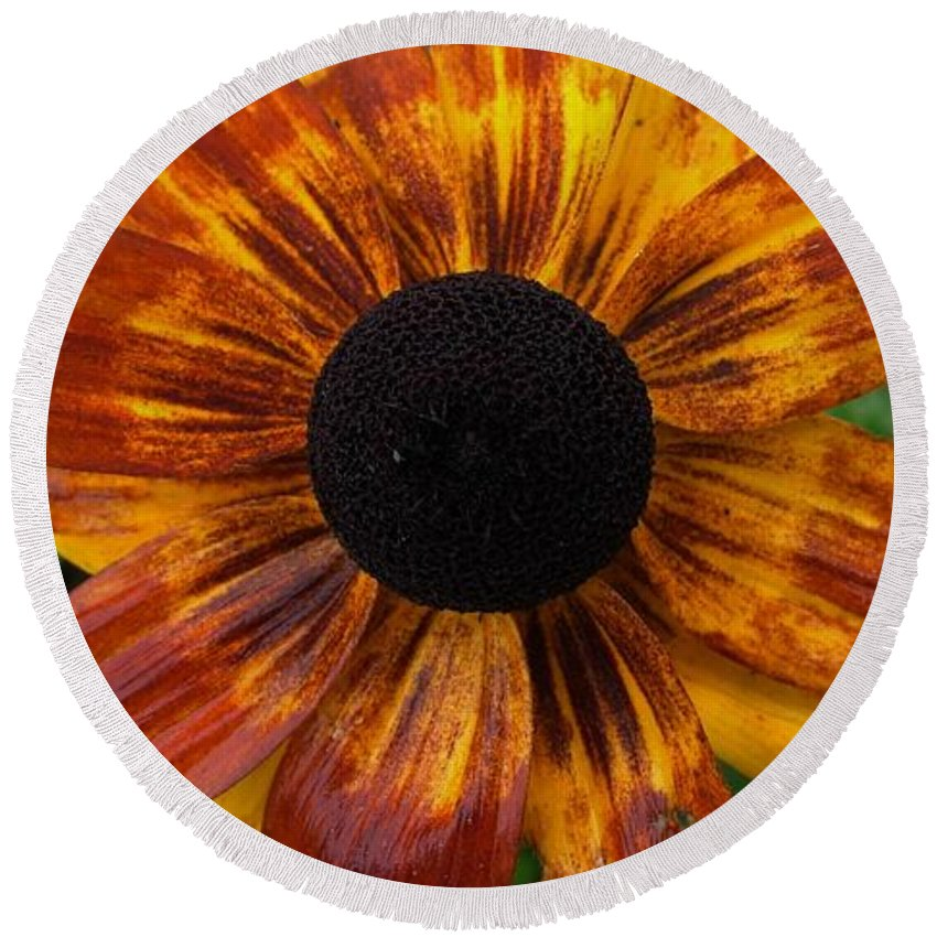 Flower Round Beach Towel featuring the photograph Black Eyed Susan by Carl Moore