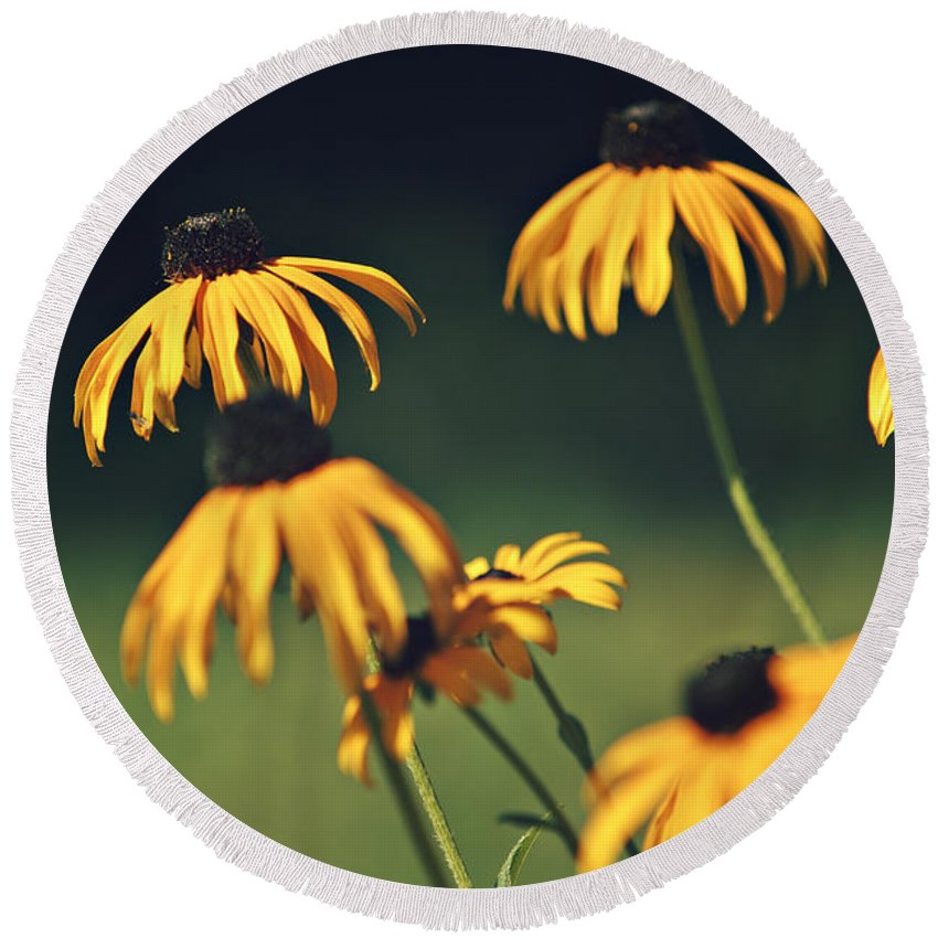 Flower Round Beach Towel featuring the photograph Black Eyed Susan by Dan Radi