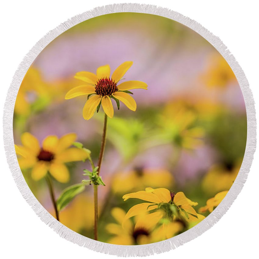 August Round Beach Towel featuring the photograph Black Eyed Susan Sunflowers In Field by Carol Mellema