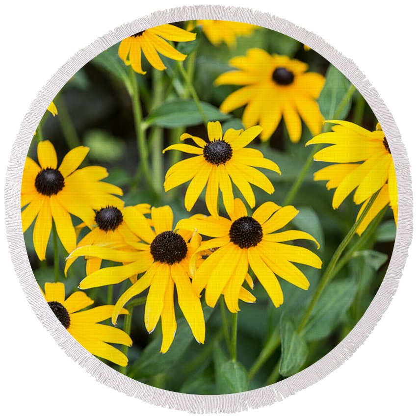 Floral Round Beach Towel featuring the photograph Black-eyed Susan Up Close by E Faithe Lester