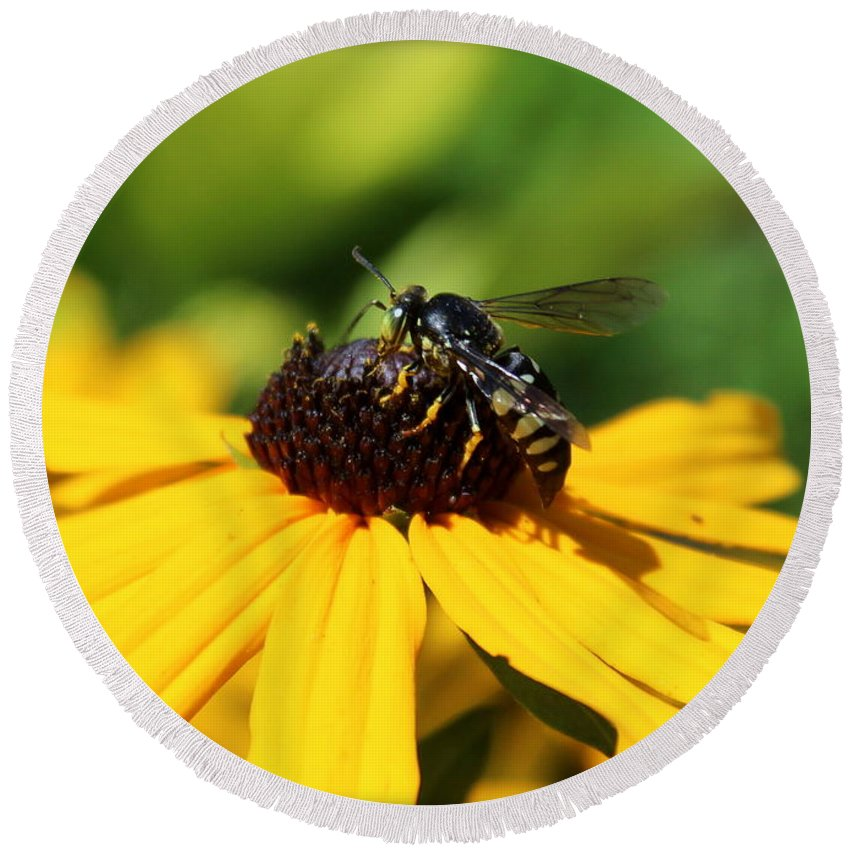 Wasp Round Beach Towel featuring the photograph Black Eyed Susan With Wasp by Anita Hiltz
