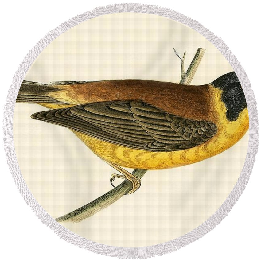 Bird Round Beach Towel featuring the painting Black Headed Bunting by English School