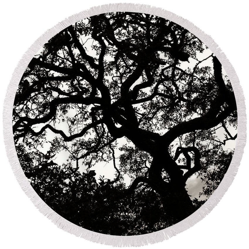 Black Round Beach Towel featuring the photograph Black Jack Oak by Marilyn Hunt