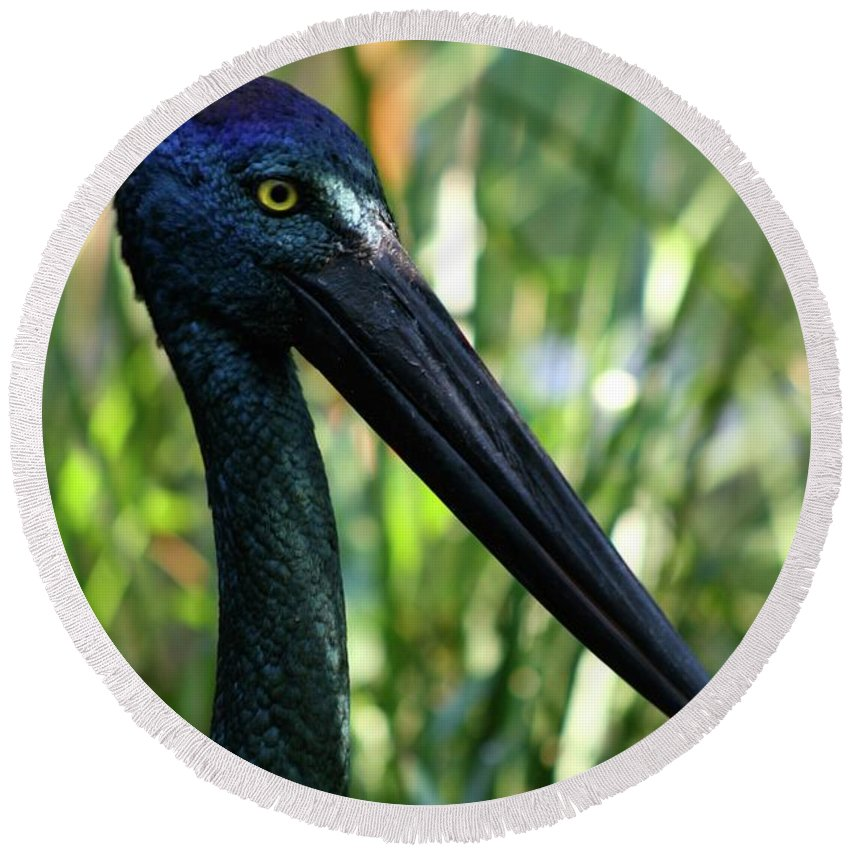 Black Necked Stork Round Beach Towel featuring the photograph Black Necked Stork 1 by Gregory E Dean
