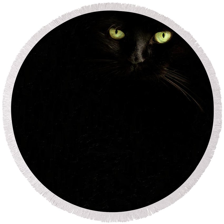 Animals Round Beach Towel featuring the photograph Black On Black by Sue Collura