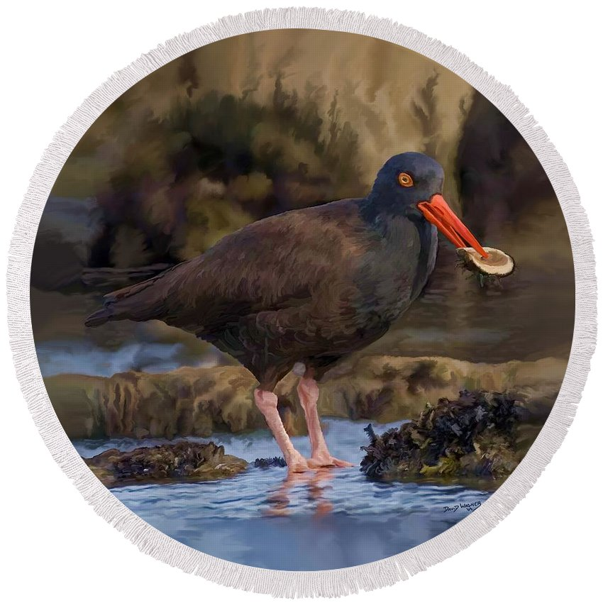 Black Oyster Catcher Round Beach Towel featuring the painting Black Oyster Catcher by David Wagner