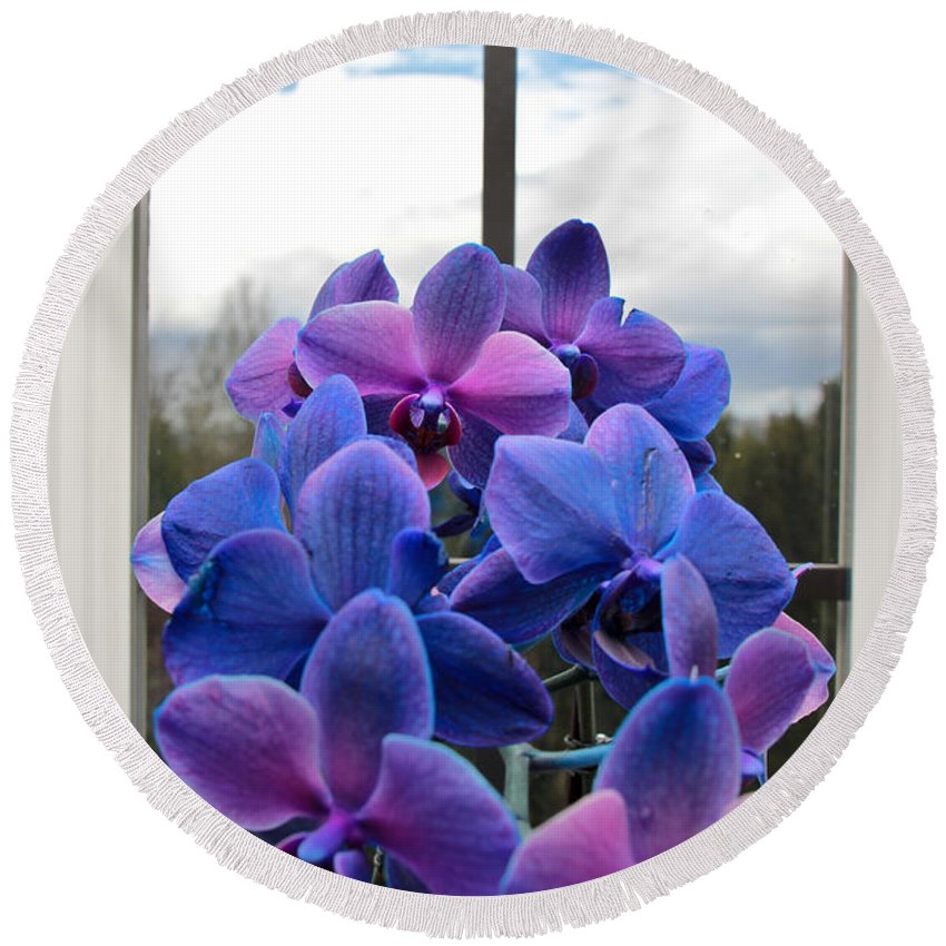 Orchids Round Beach Towel featuring the photograph Black Sapphire Orchids by Aaron Berg