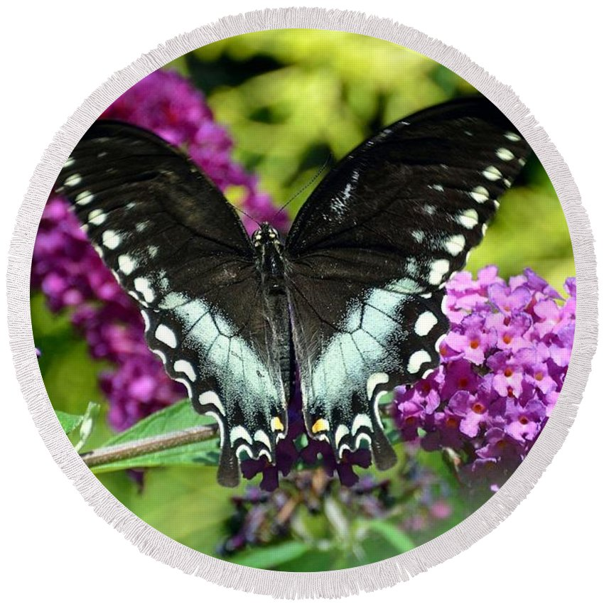Gardening Round Beach Towel featuring the photograph Black Swallowtail Butterfly by Debra Bender