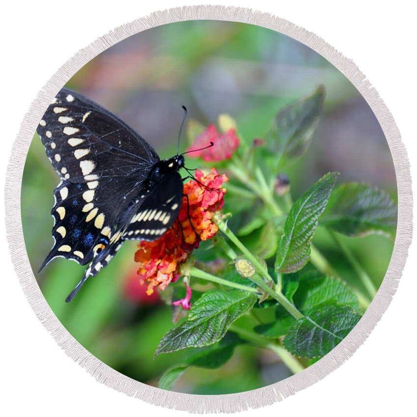 Butterfly Round Beach Towel featuring the photograph Black Swallowtail by Kay Lovingood