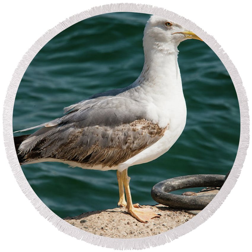 Burgazada Island Round Beach Towel featuring the photograph Black Tailed Gull On Dock by Bob Phillips