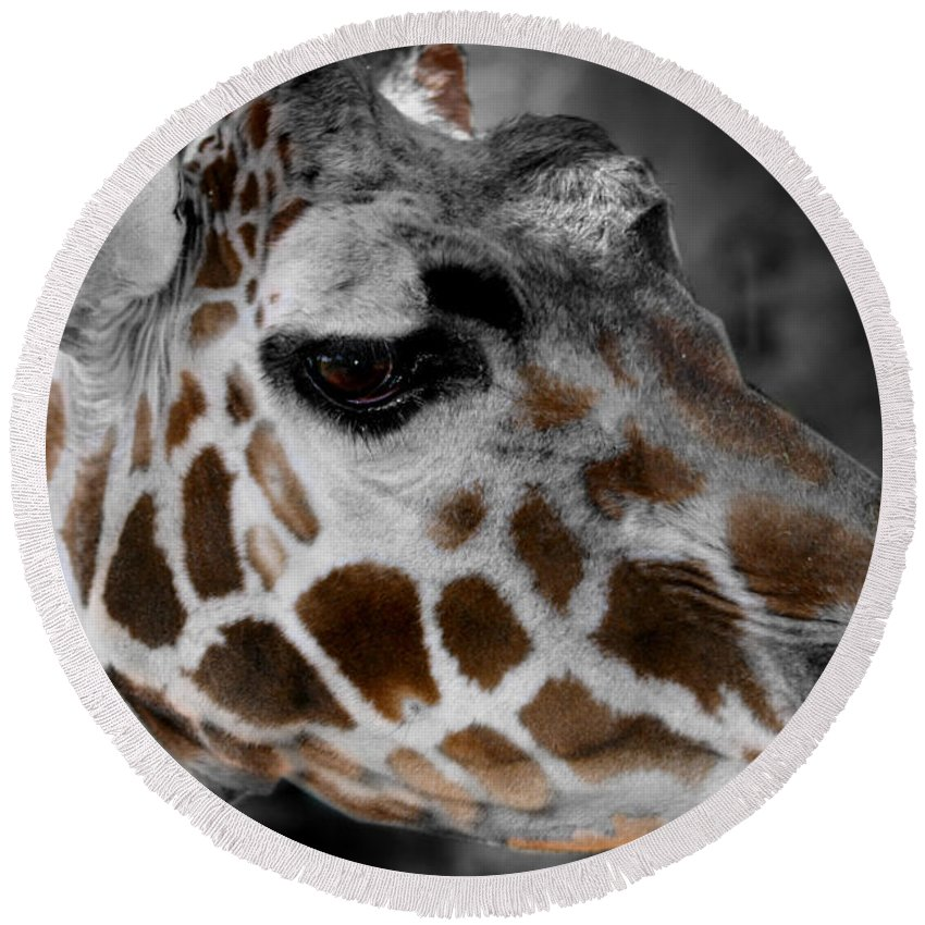Giraffe Round Beach Towel featuring the photograph Black White And Color Giraffe by Anthony Jones