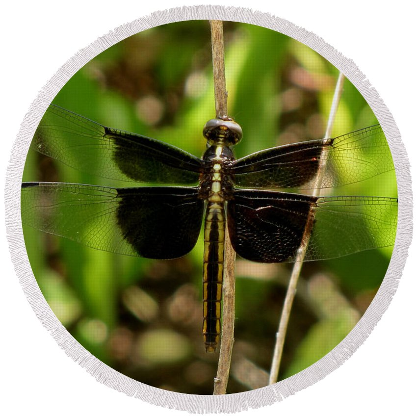 Dragonfly Round Beach Towel featuring the photograph Widow Skimmer Dragonfly Female by Donna Brown