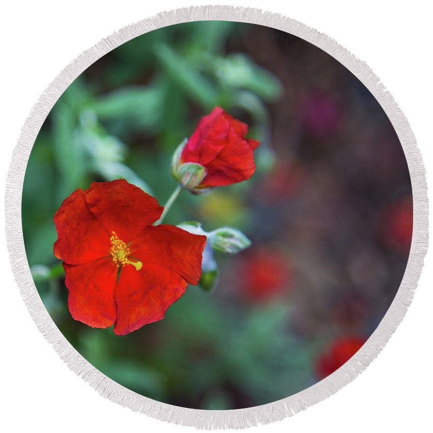 Red Flowers Round Beach Towel featuring the photograph Bleeding Spring by Alex Art and Photo