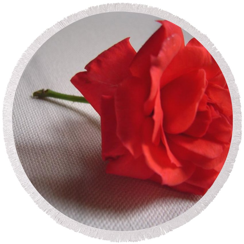 Blood Round Beach Towel featuring the photograph Blood Red Rose by Usha Shantharam