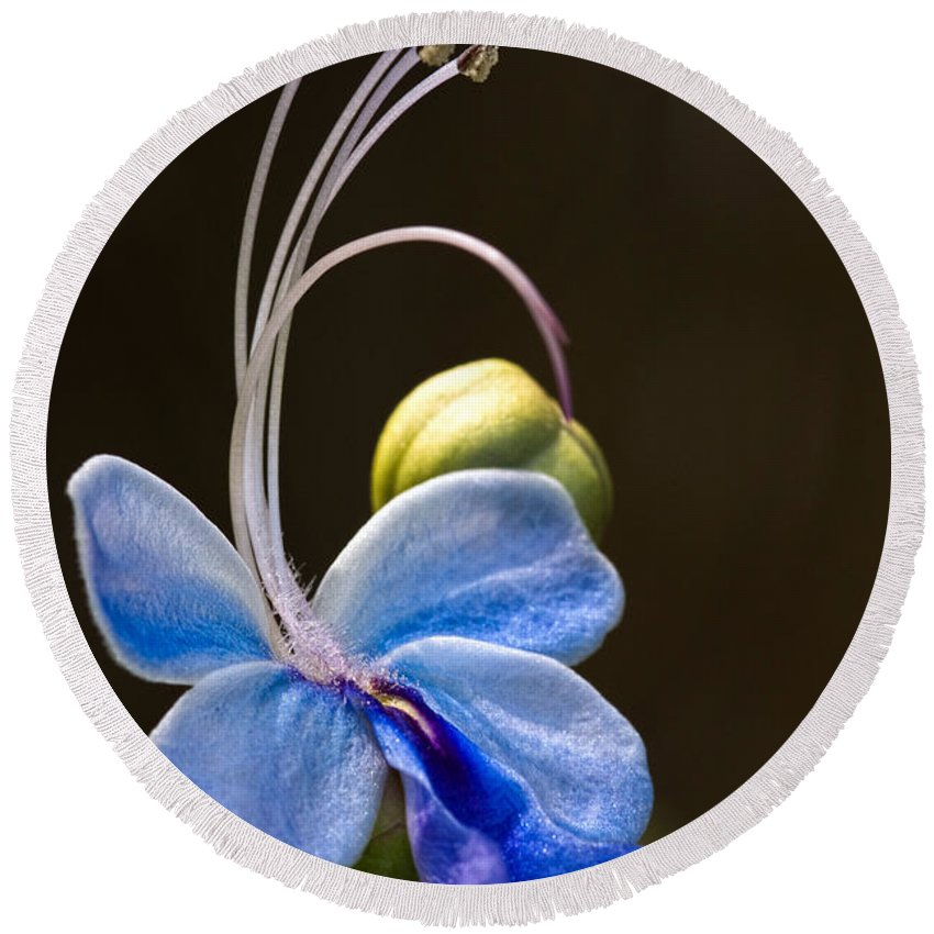 Flower Round Beach Towel featuring the photograph Blooming Butterfly by Christopher Holmes