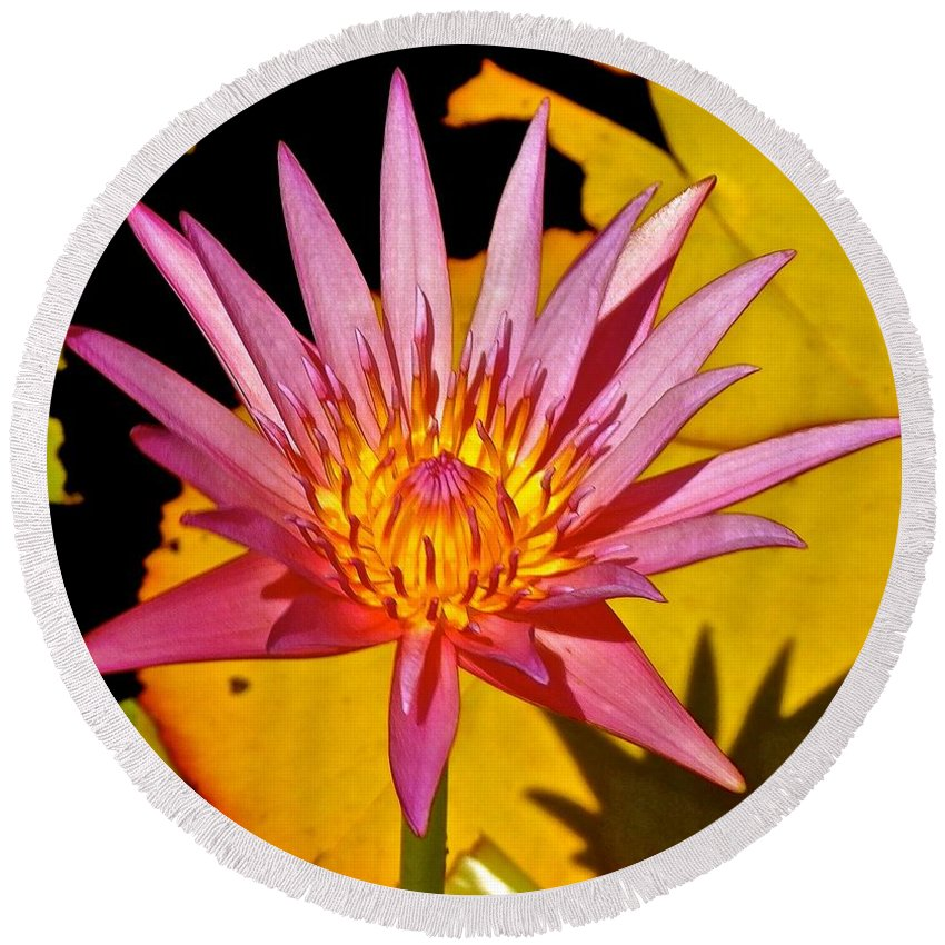 Lotus Round Beach Towel featuring the photograph Blooming Lotus Flower by Joe Wyman