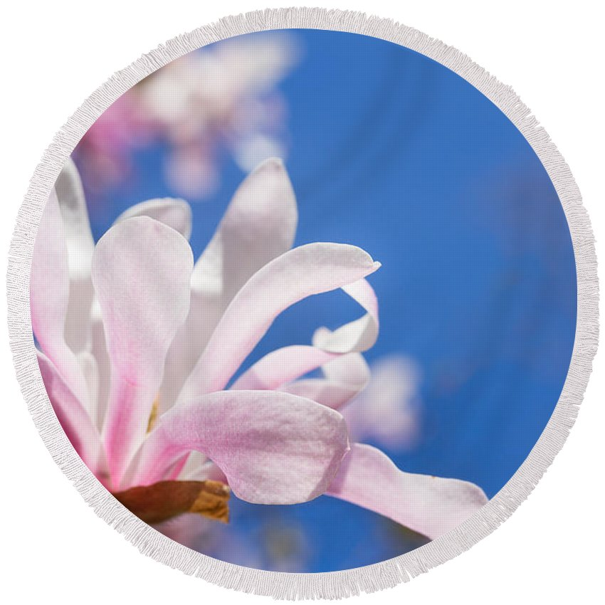 Spring Round Beach Towel featuring the photograph Blooming Magnolia Flower by Anastasy Yarmolovich