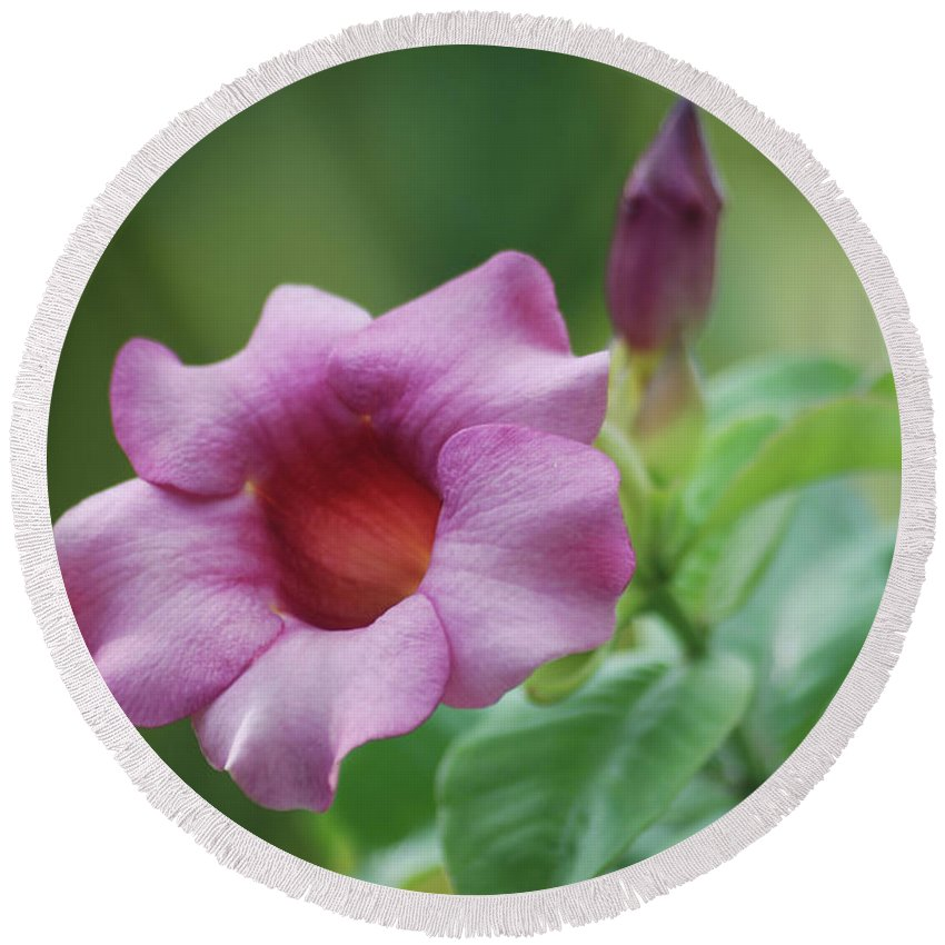Flower Round Beach Towel featuring the photograph Blossom Of Allamanda by Michael Peychich