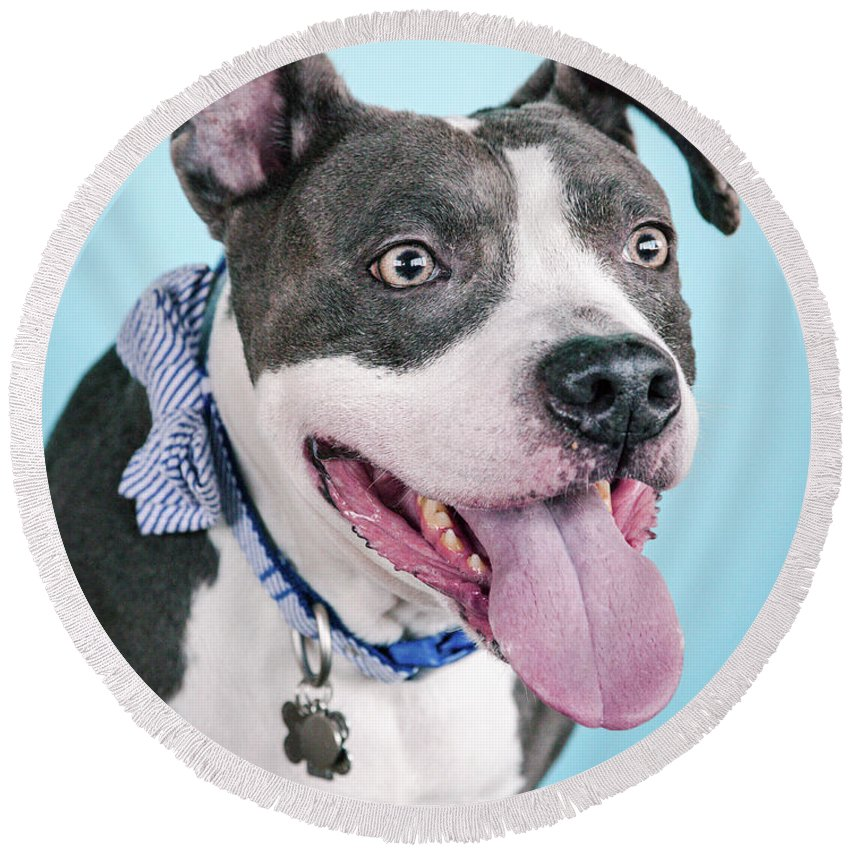 Dog Round Beach Towel featuring the photograph Blu 7 by Pit Bull Headshots by Headshots Melrose