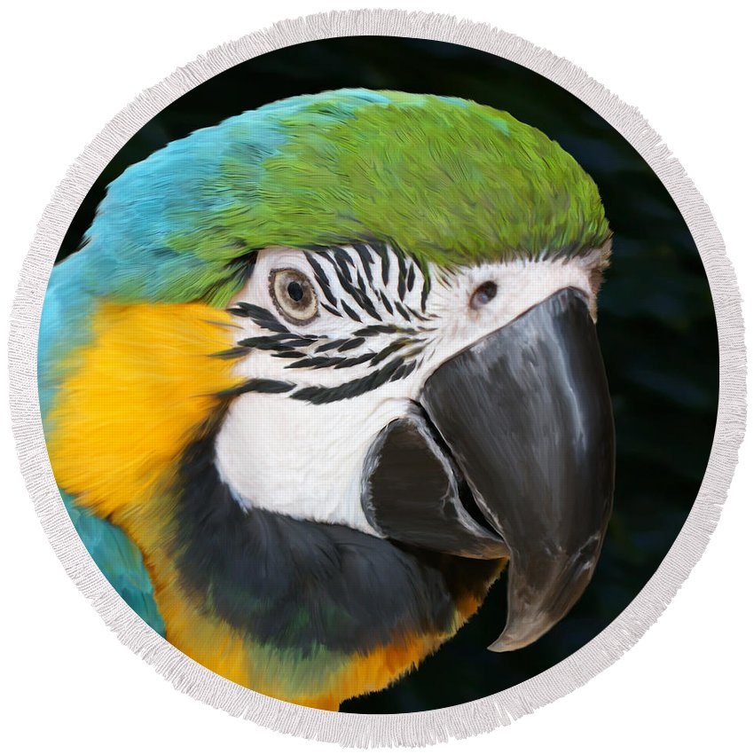 Macaw Round Beach Towel featuring the painting Blue And Gold Macaw Freehand Painting Square Format by Ernie Echols