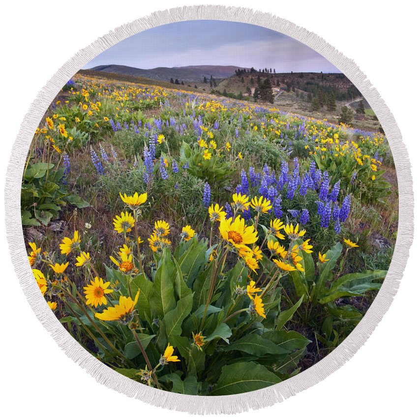 Lupine Round Beach Towel featuring the photograph Blue And Gold by Mike Dawson
