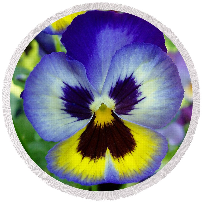 Flowers Round Beach Towel featuring the photograph Blue And Yellow Pansy by Nancy Mueller