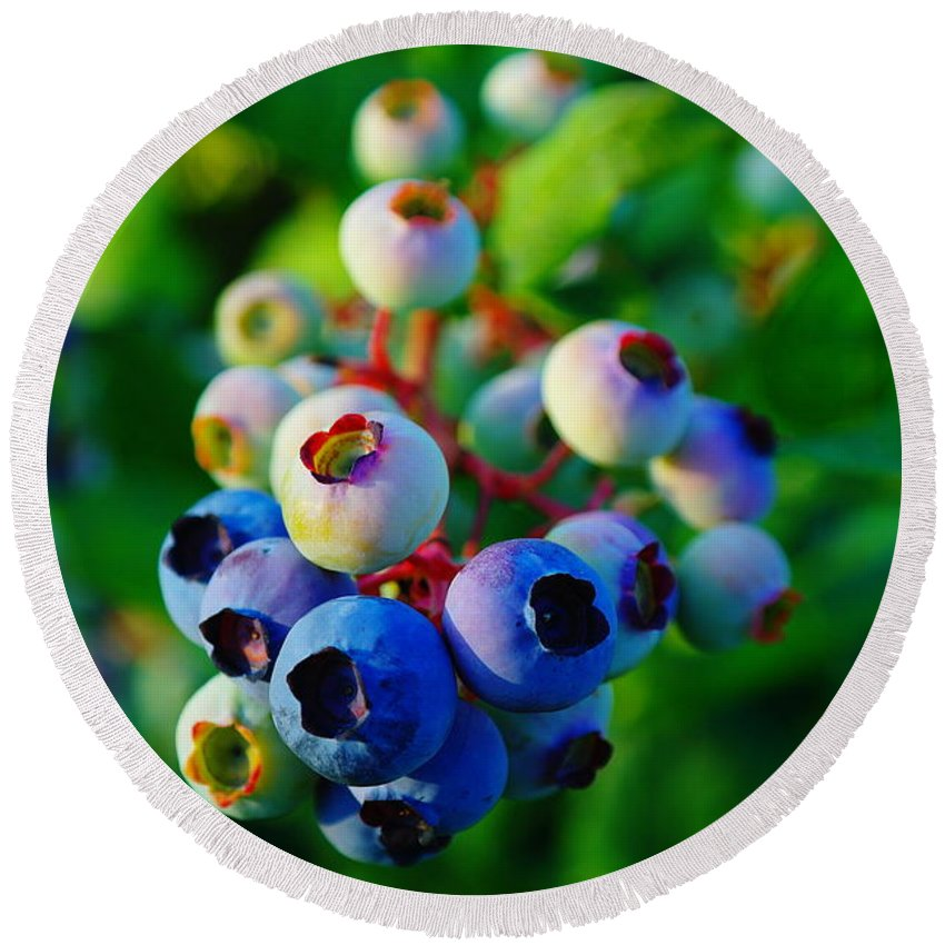 Blue Berries Round Beach Towel featuring the photograph Blue Berries by Jeff Swan