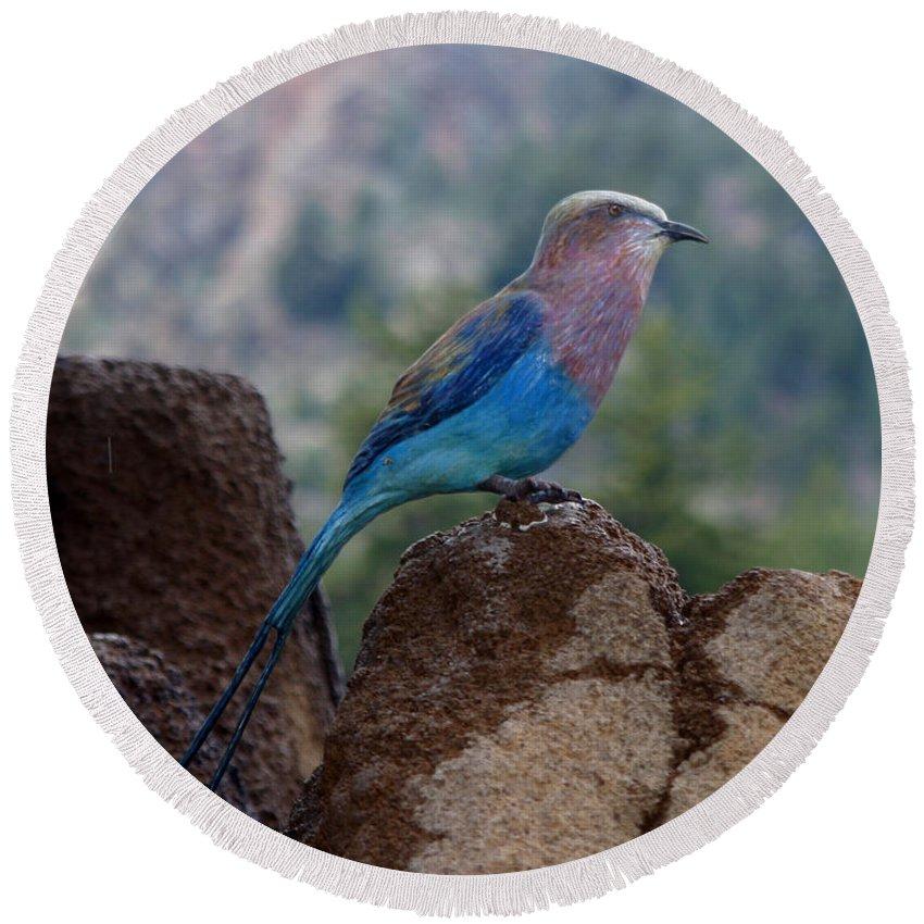 Bird Round Beach Towel featuring the photograph Blue Bird by Anthony Jones