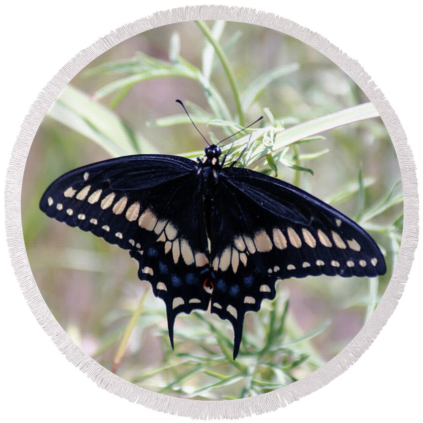 Swallowtail Round Beach Towel featuring the photograph Blue Black Swallowtail by Debby Pueschel