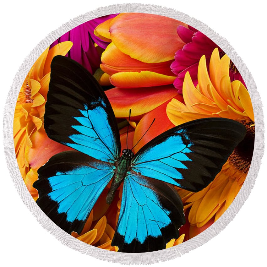 Butterfly Tulips Daisy�s Round Beach Towel featuring the photograph Blue Butterfly On Brightly Colored Flowers by Garry Gay