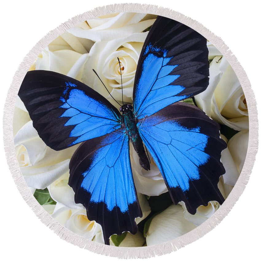 Blue Butterfly Round Beach Towel featuring the photograph Blue Butterfly On White Roses by Garry Gay