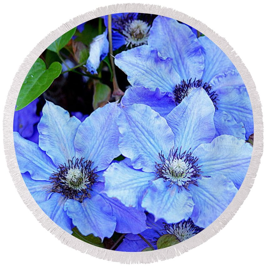 Flower Round Beach Towel featuring the photograph Blue Clematis by AJ Schibig