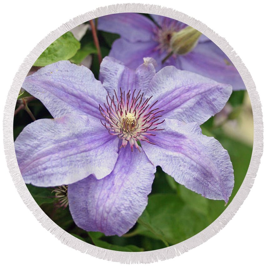 Clematis Round Beach Towel featuring the photograph Blue Clematis by Margie Wildblood