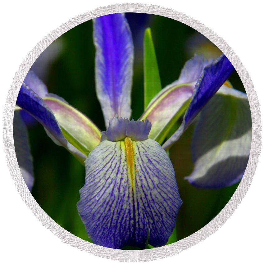 Blue Flag Iris Round Beach Towel featuring the photograph Blue Flag Iris by Barbara Bowen