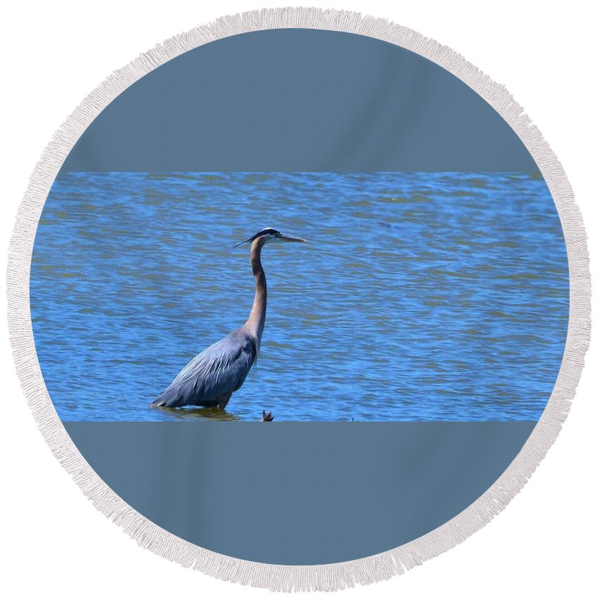 Heron Round Beach Towel featuring the photograph Blue Heron by Eileen Brymer