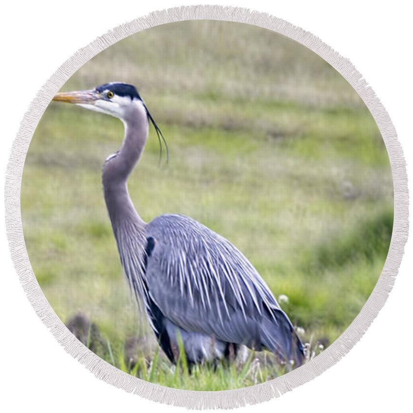 Round Beach Towel featuring the photograph Blue Heron In Northern Wa by Cathy Anderson