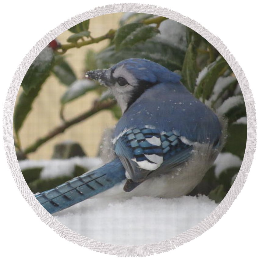 Blue Round Beach Towel featuring the photograph Blue Jay Beauty by Tammy Finnegan