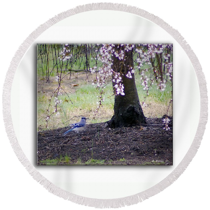 2d Round Beach Towel featuring the photograph Blue Jay by Brian Wallace