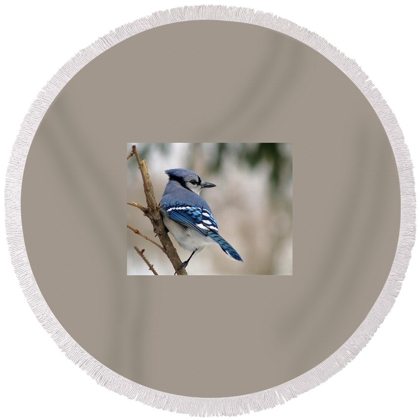 Blue Jay Round Beach Towel featuring the photograph Blue Jay by Gaby Swanson