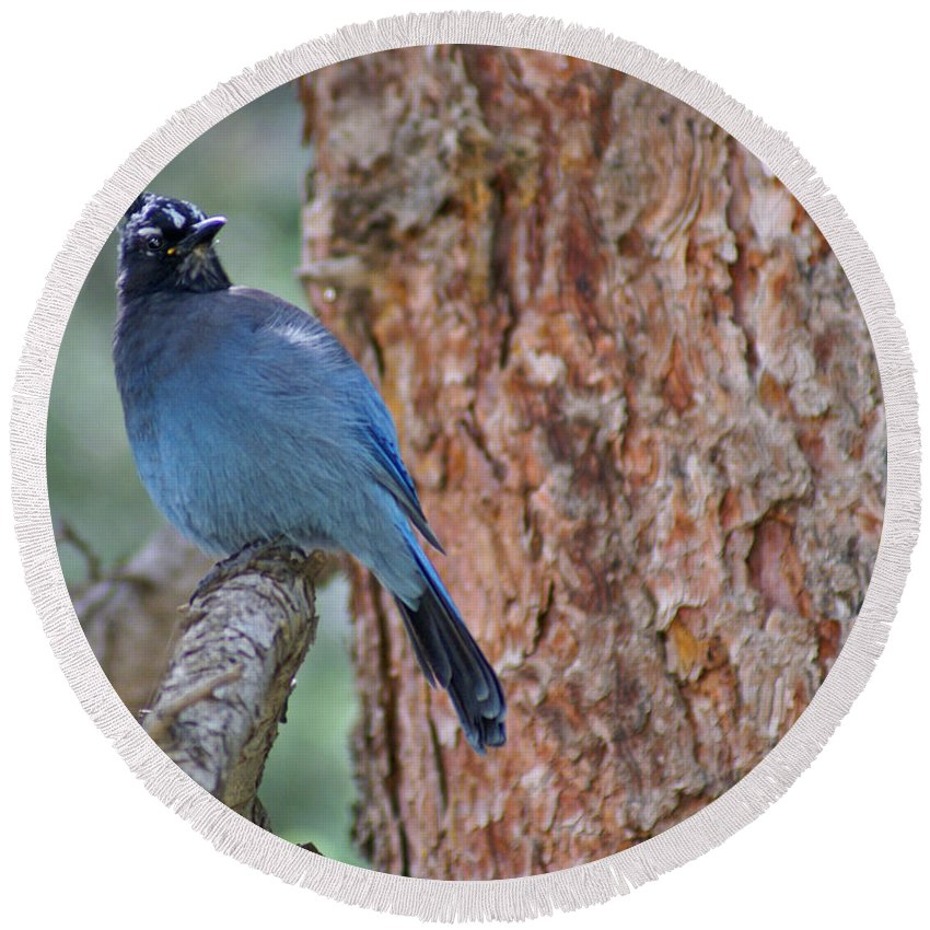 Blue Jay Round Beach Towel featuring the photograph Blue Jay by Heather Coen