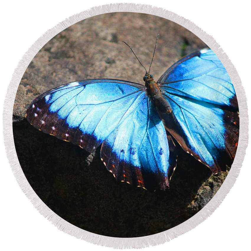 Blue Morpho Round Beach Towel featuring the photograph Blue Morpho #2 by Lorraine Baum