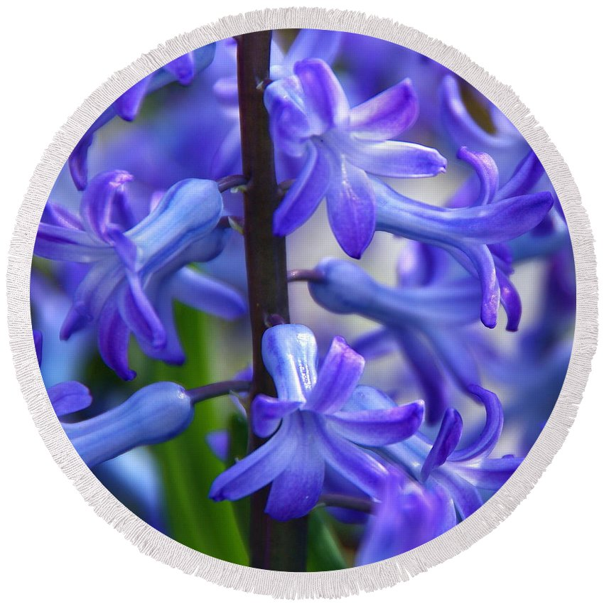 Blue Hyacinth Round Beach Towel featuring the photograph Blue Rhapsody by Byron Varvarigos