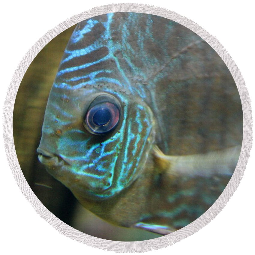 Blue Fish Round Beach Towel featuring the greeting card Blue Tropical Fish by Carol Groenen