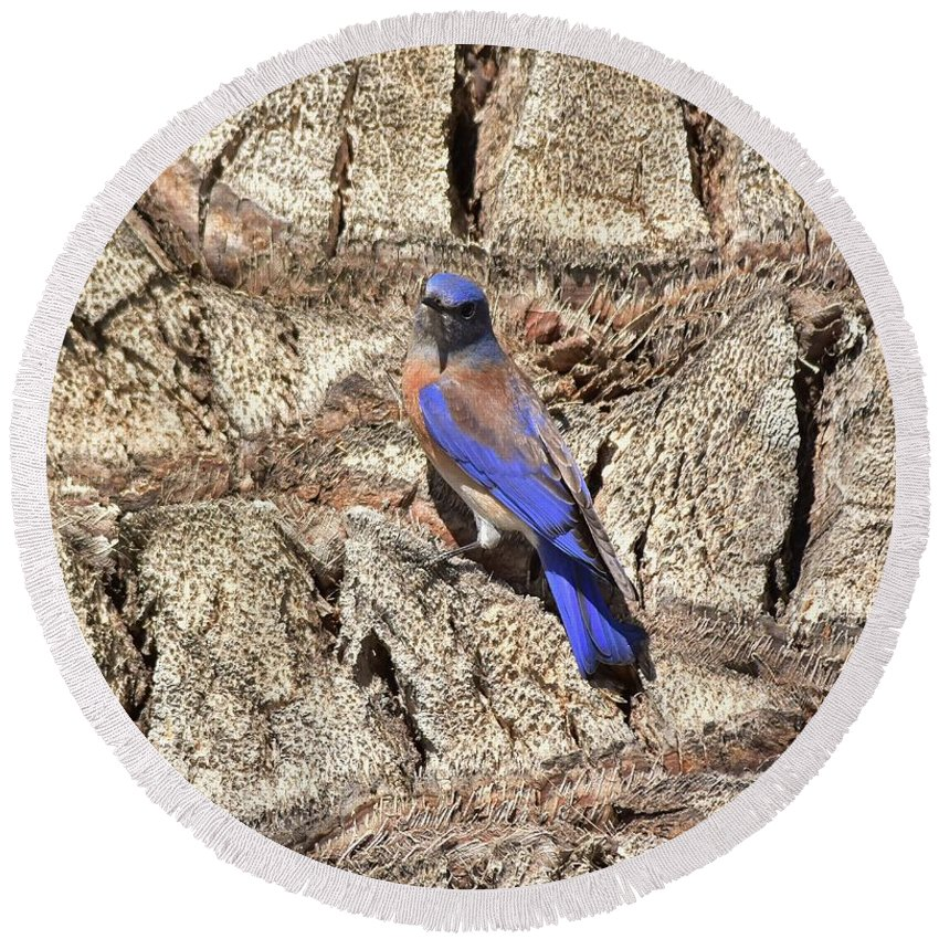 Linda Brody Round Beach Towel featuring the photograph Bluebird On Canary Island Palm I by Linda Brody
