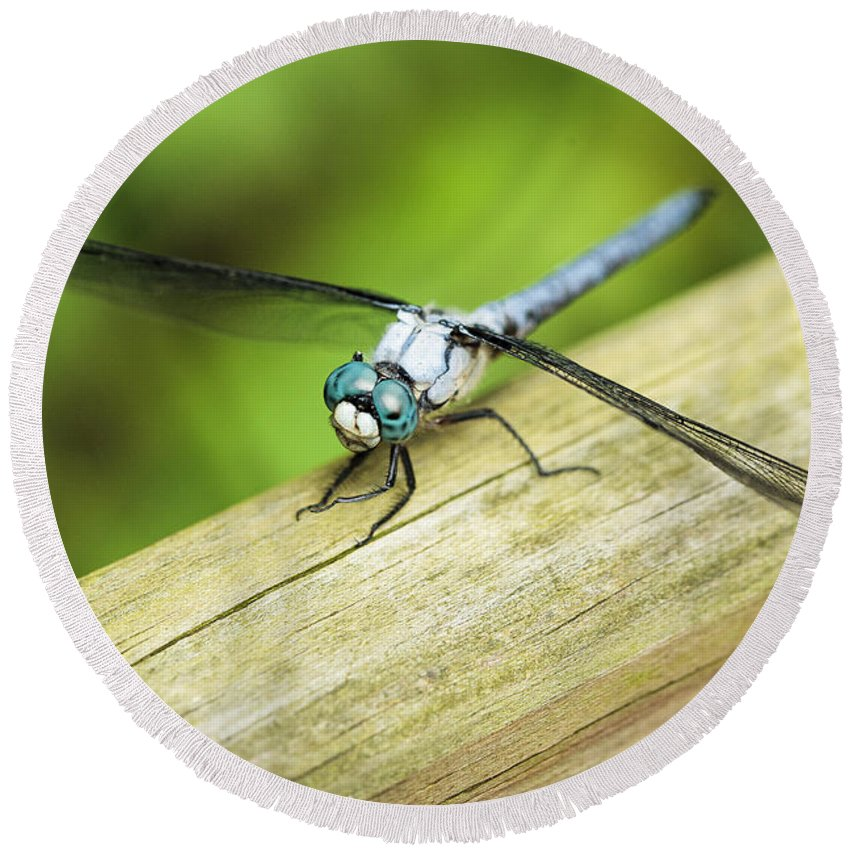 Blue Round Beach Towel featuring the photograph Blued Eyed Darner by Marilyn Hunt