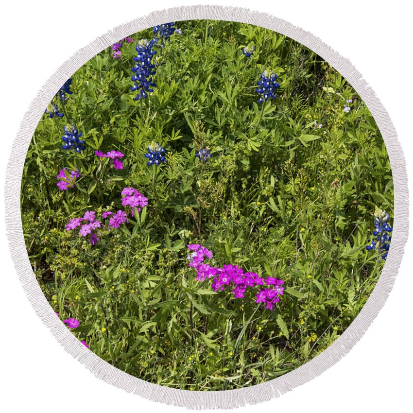 Fredericksburg Texas White Bluebonnet Bluebonnets Grass Grasses Bloom Blooms Flower Flowers Pink Phlox Hill Country Round Beach Towel featuring the photograph Blues And Pinks by Bob Phillips