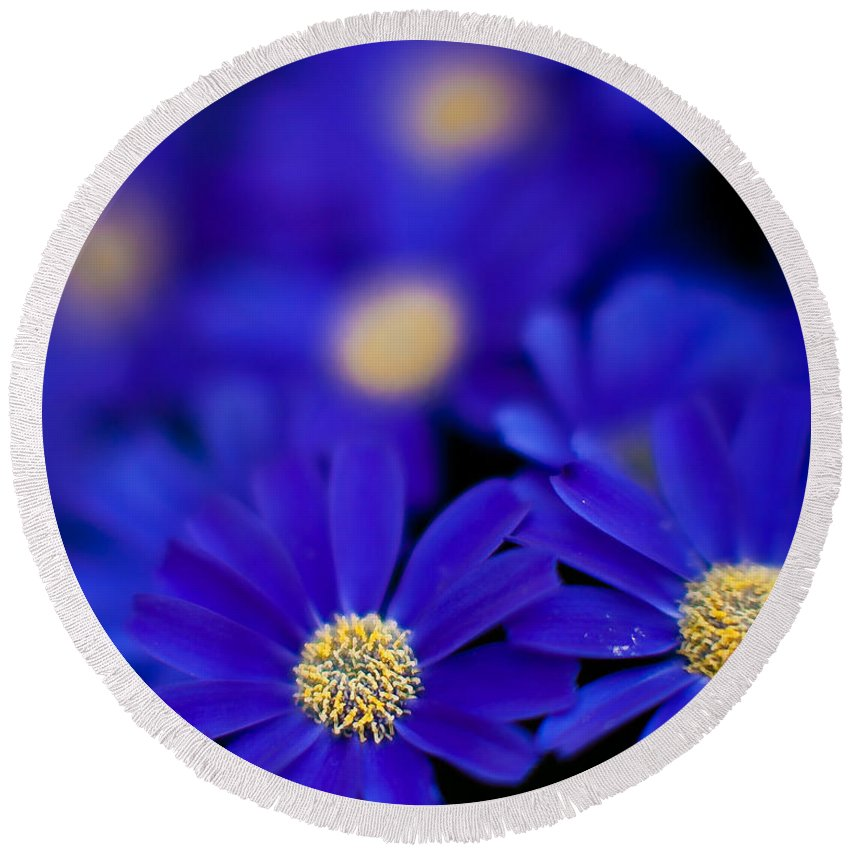 Flower Round Beach Towel featuring the photograph Bluey Gerbera by Mike Reid