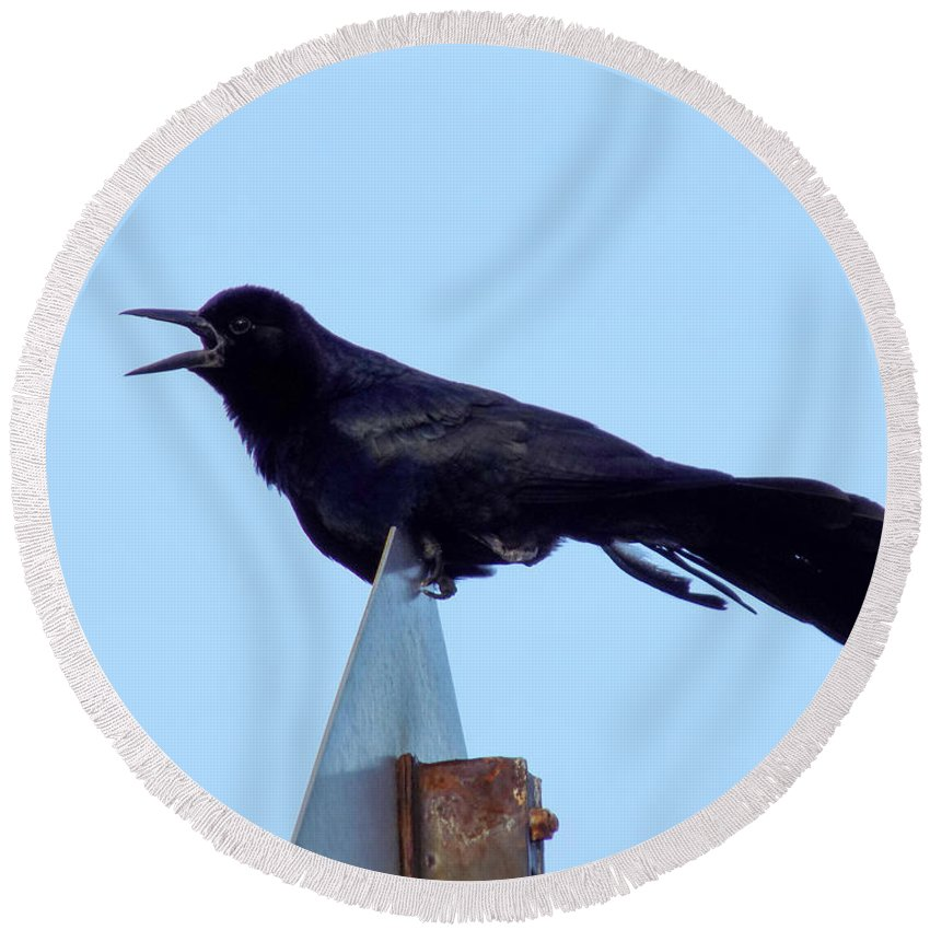 Boat Tailed Grackle Round Beach Towel featuring the photograph Boat Tailed Grackle by William Tasker