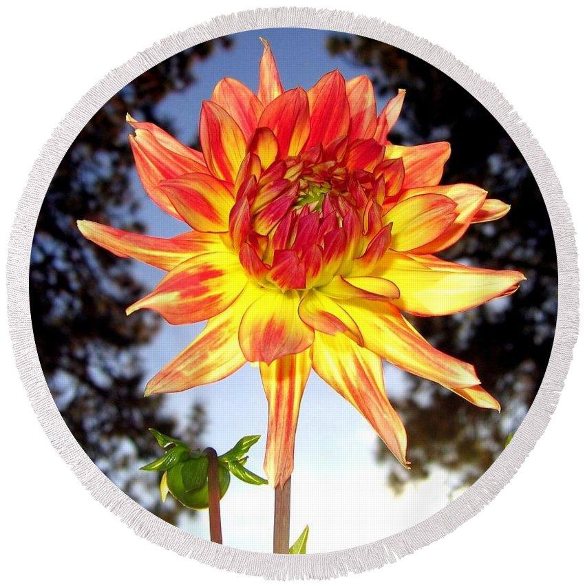 Dahlia Round Beach Towel featuring the photograph Bold And Beautiful by Will Borden